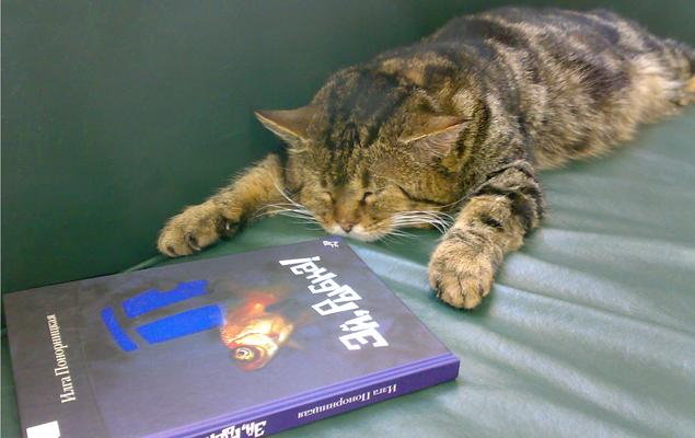 На Кубани официально взяли на работу кота