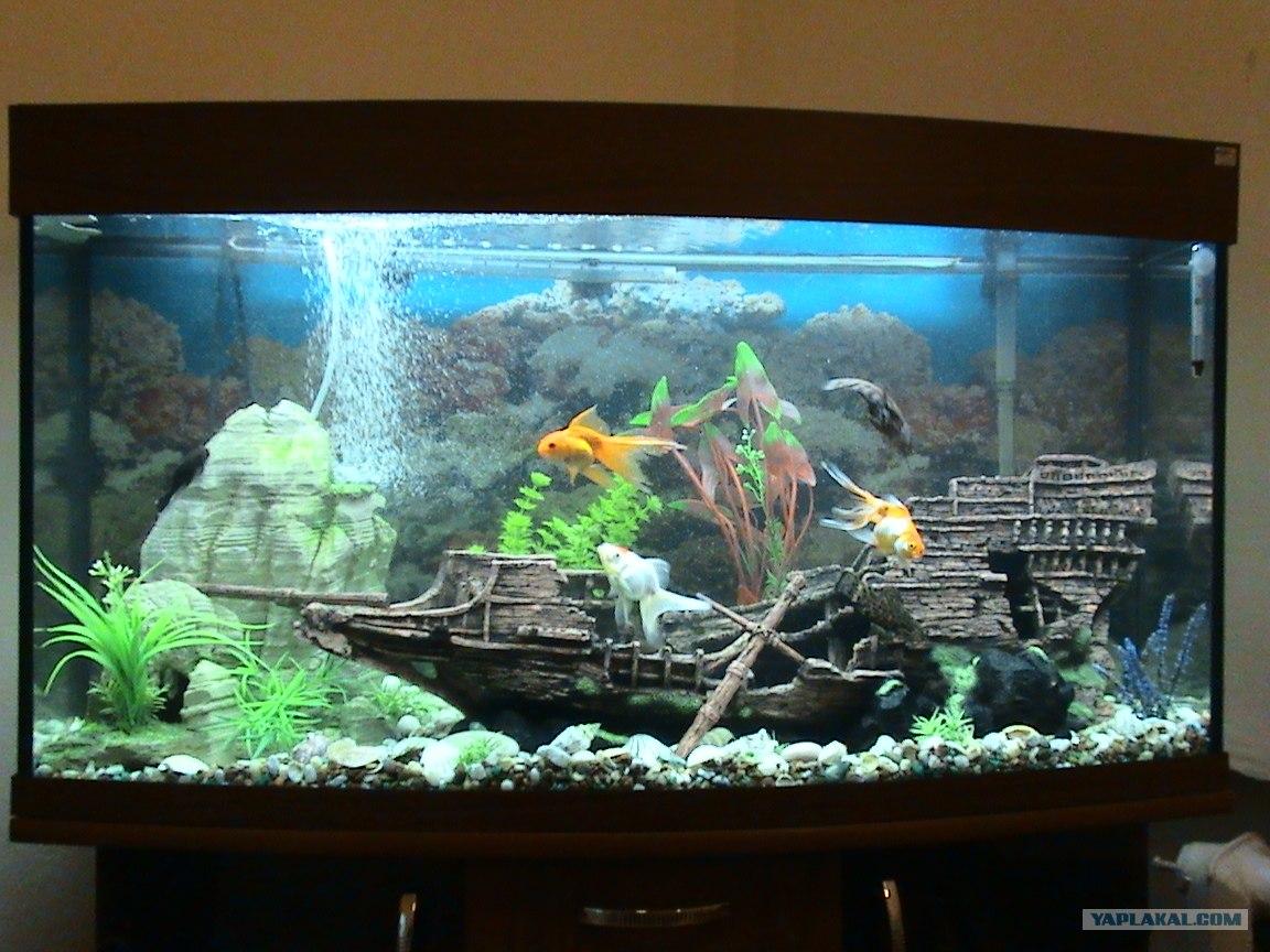 Как сделать подсветку для аквариум 511