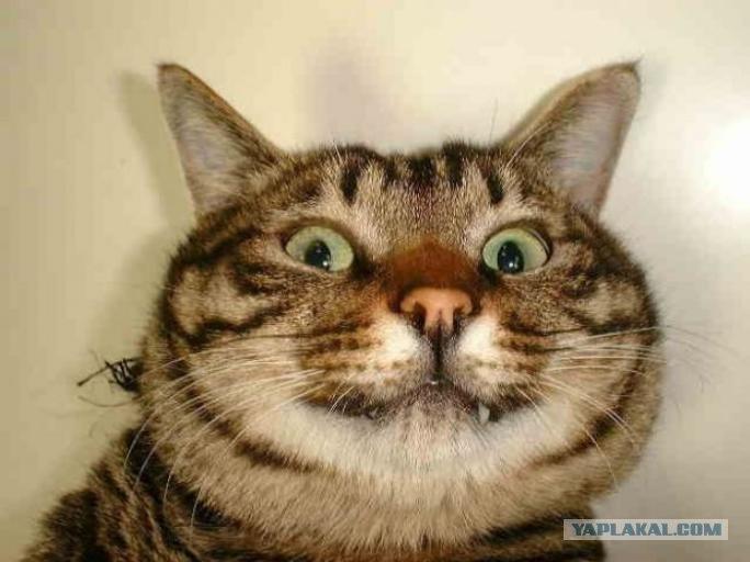 Накуренный кот