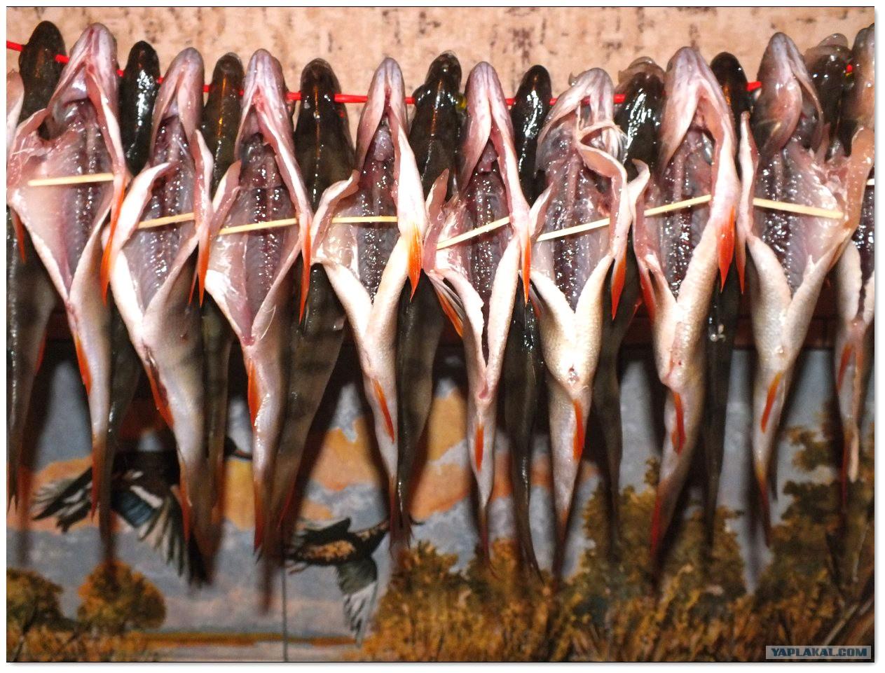 Почему умирают рыбки в аквариуме и 14
