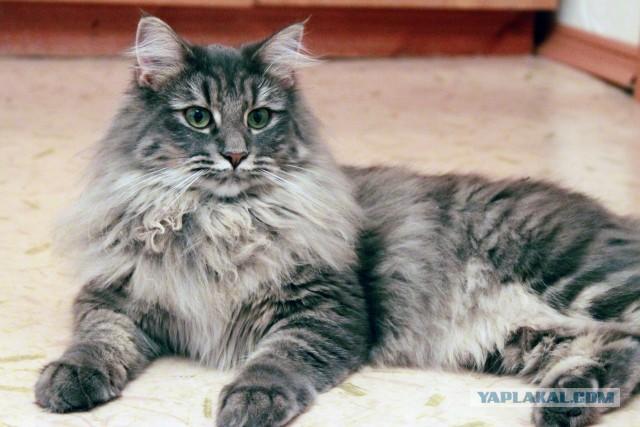 крысолов фото кот