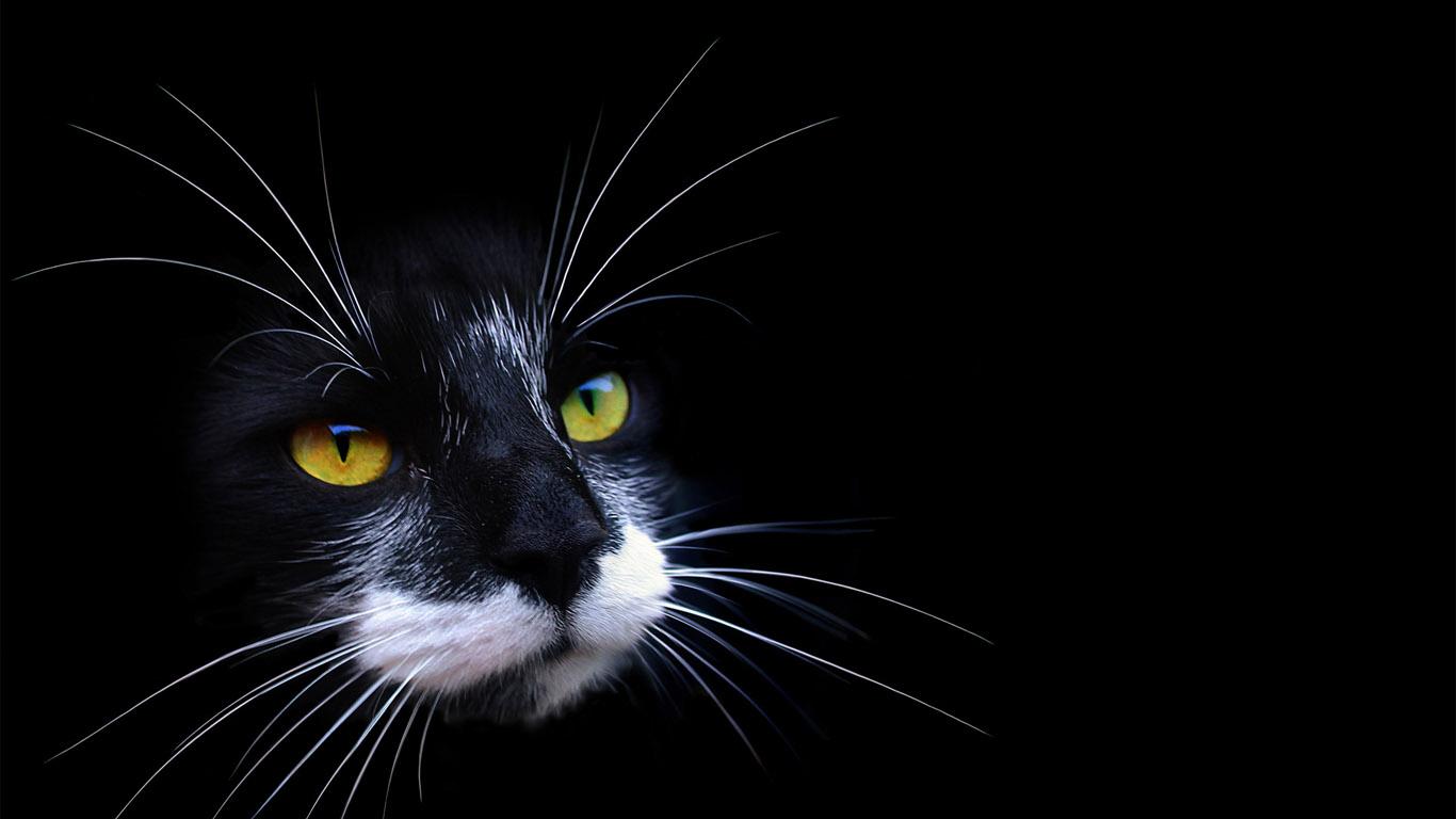 живые обои на рабочий стол кошка ходит по монитору № 177745  скачать
