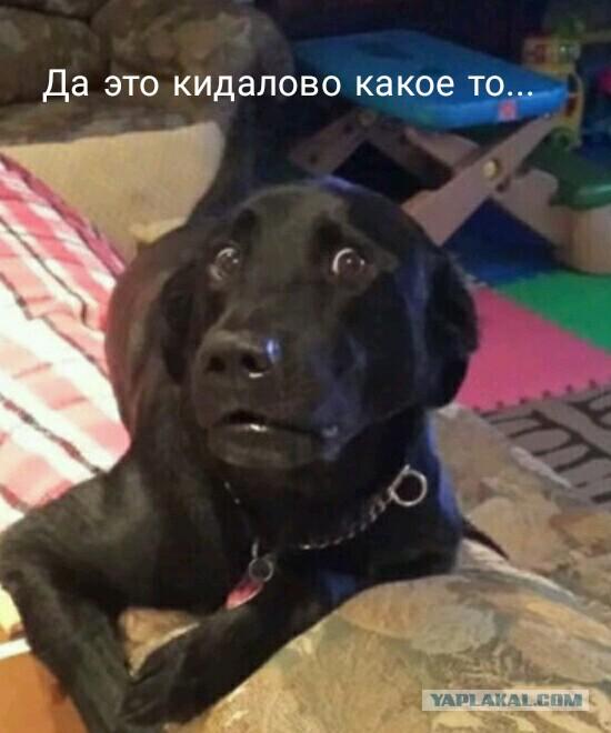 """""""Да как тебя достать-то?!"""""""