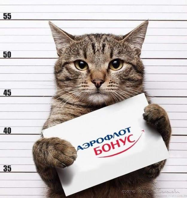 «Сегодня – кот, а завтра – каждый из нас»: реакция соцсетей на конфликт «Аэрофлота» и хозяина толстого кота
