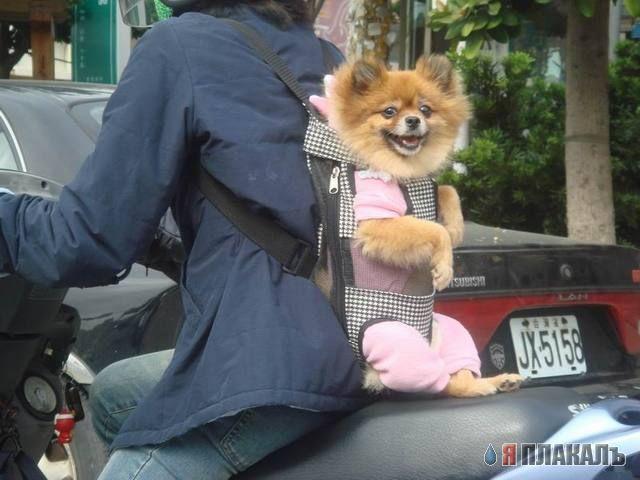 Перевозка рюкзак для собак школьный рюкзак mike mar oxford 1074-ox-03