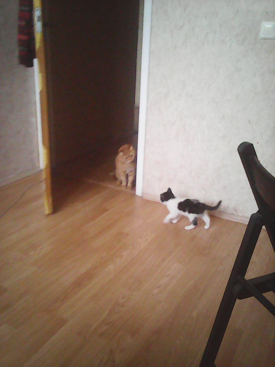 Сосед зашел в гости фото 215-576
