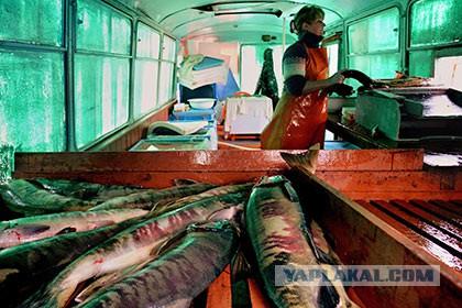Названа основная причина резкого подорожания рыбы в России