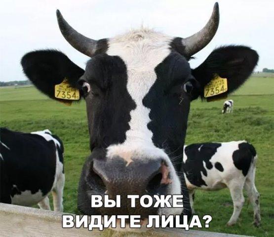 http://s00.yaplakal.com/pics/pics_original/6/9/7/11518796.jpg