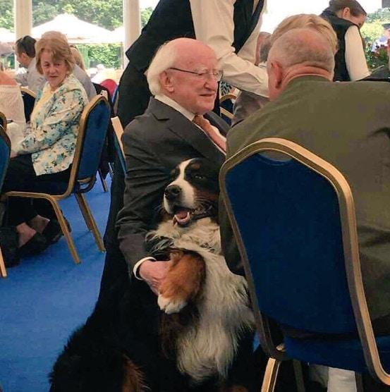 77-летний президент Ирландии ведёт себя как простой человек, чем и заслужил симпатию людей по всему миру