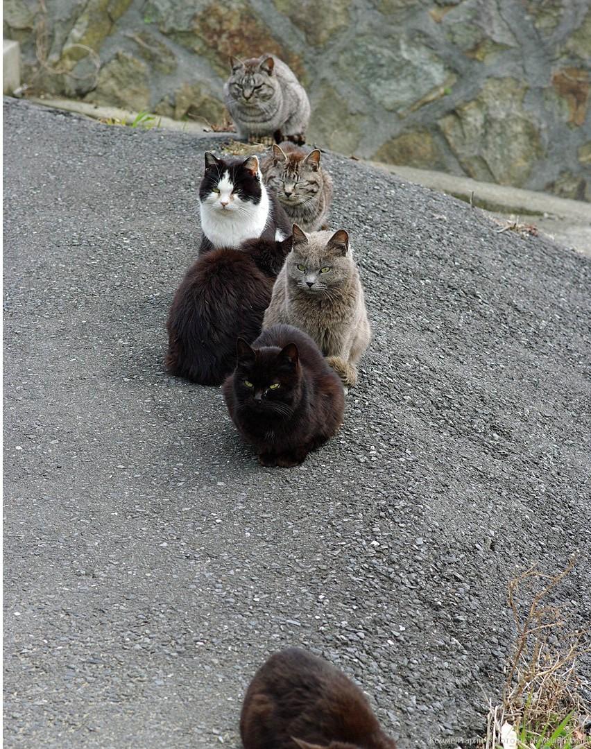 Остров кошек в японии после цунами
