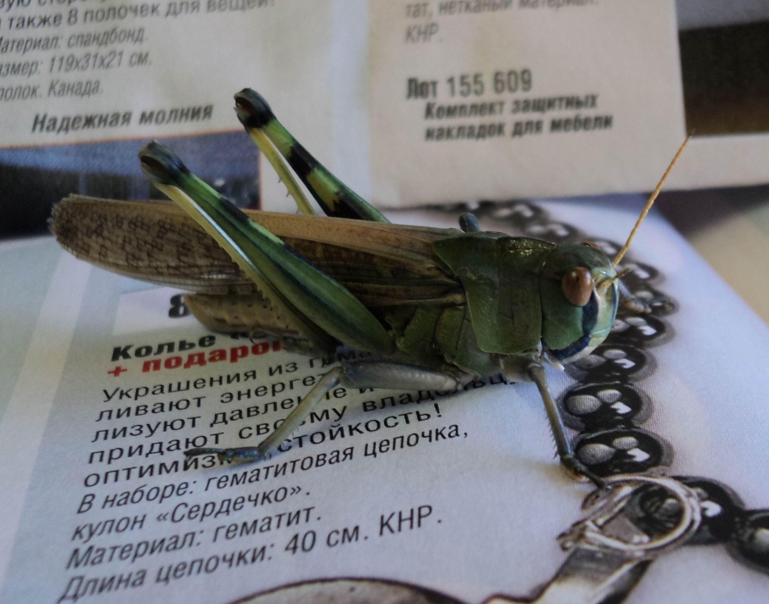 Макрофотографии от вячеслава мищенко 6