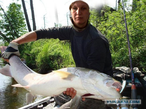 фотошоп улов рыбака