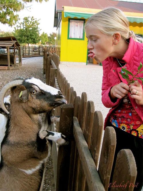 Две козы.