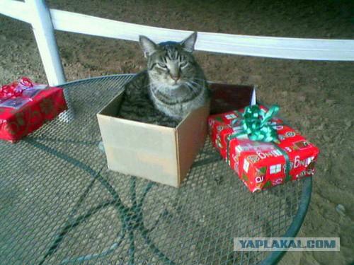 Как сделать коту подарок своими руками