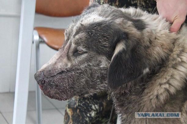 В городе Узловая Тульской области неизвестный расстреливает собак из охотничьего ружья