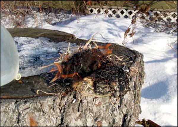 Как развести огонь подручными средствами
