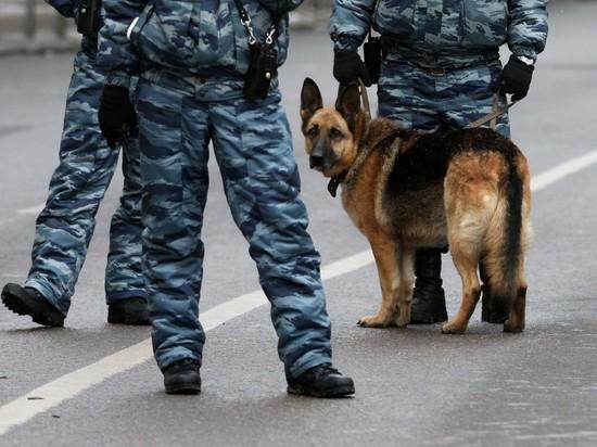 В Петербурге собака спасла девочку от изнасилования