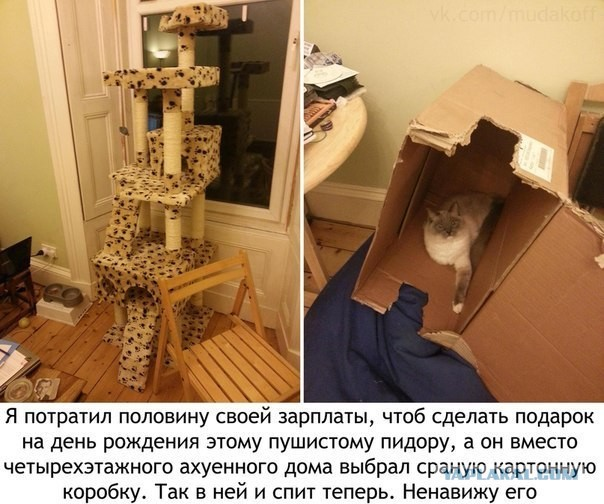 Как сделать из коробки домик для кошки своими руками