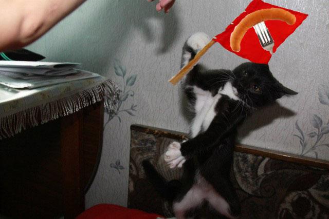 Фото писающий кот 13 фотография