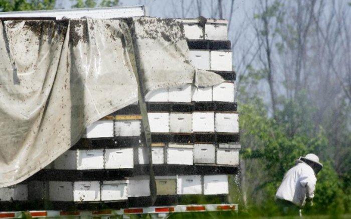 Пчелы перекрыли автостраду