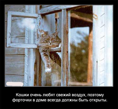 http://s00.yaplakal.com/pics/pics_original/7/5/1/1182157.jpg