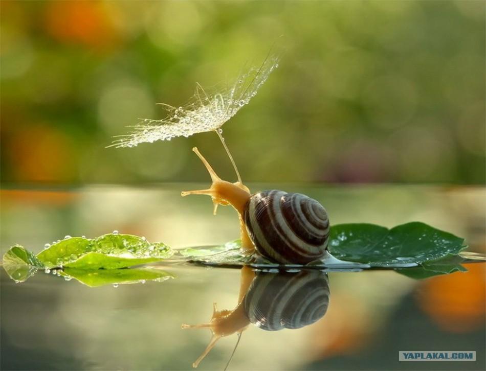Просто красивые фото - Страница 4 10780257