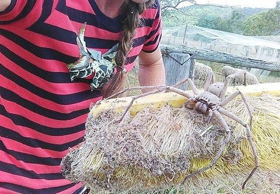 Женщина спасла от расправы гигантского паука, который держал в страхе всю округу