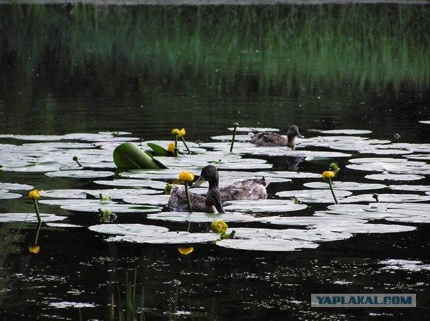 охота на уток с лодки сплавом по речке