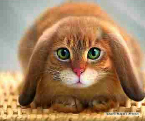 кошка скрещенная фото