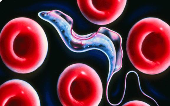 10 смертельных заболеваний, которые мы подхватили