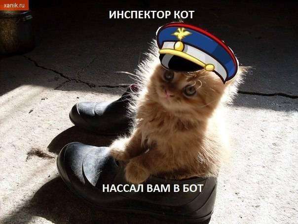 картинки кошки стихами парусам материалы способны