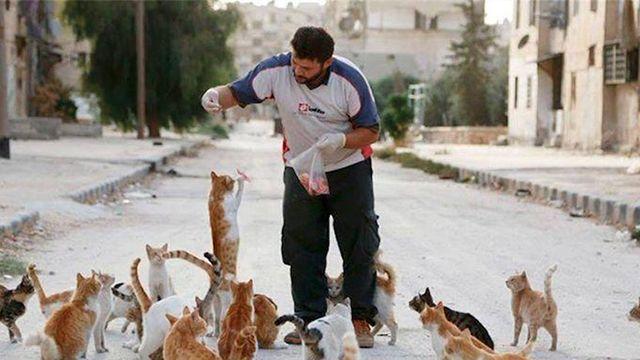 Террористы ИГИЛ запретили кошек в Ираке