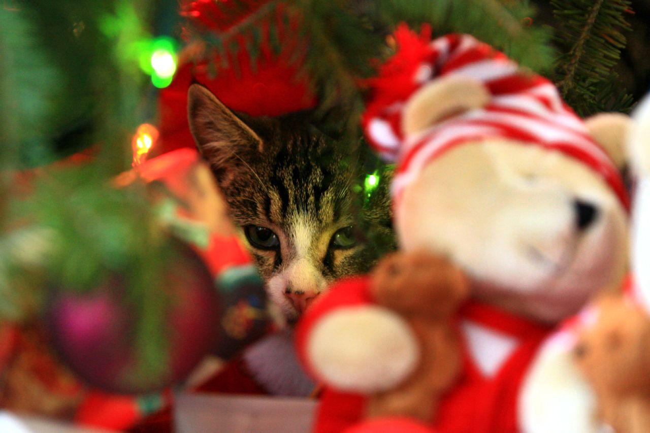 Картинки кошек и котят смешные 6