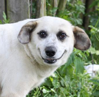 скачать бесплатно породы собак - фото 6