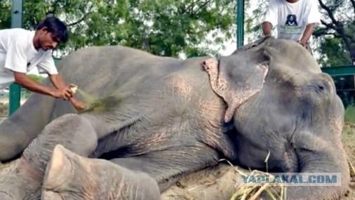 Индия: Слоны не должны быть рабами!