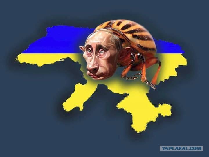 Где Вы увидели гениальность изолированного миром Путина?