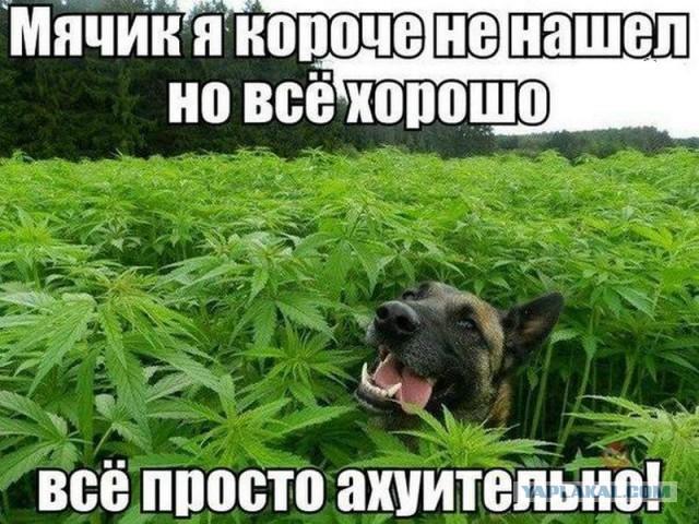 """Полтора десятка """"небоянных"""" фотографий"""