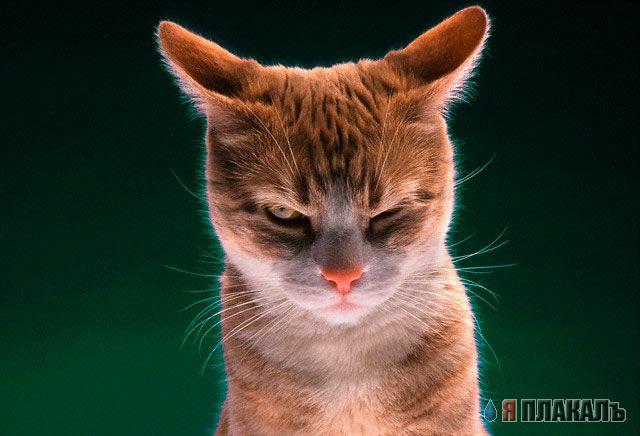 Злой кот районник часть 2 и его