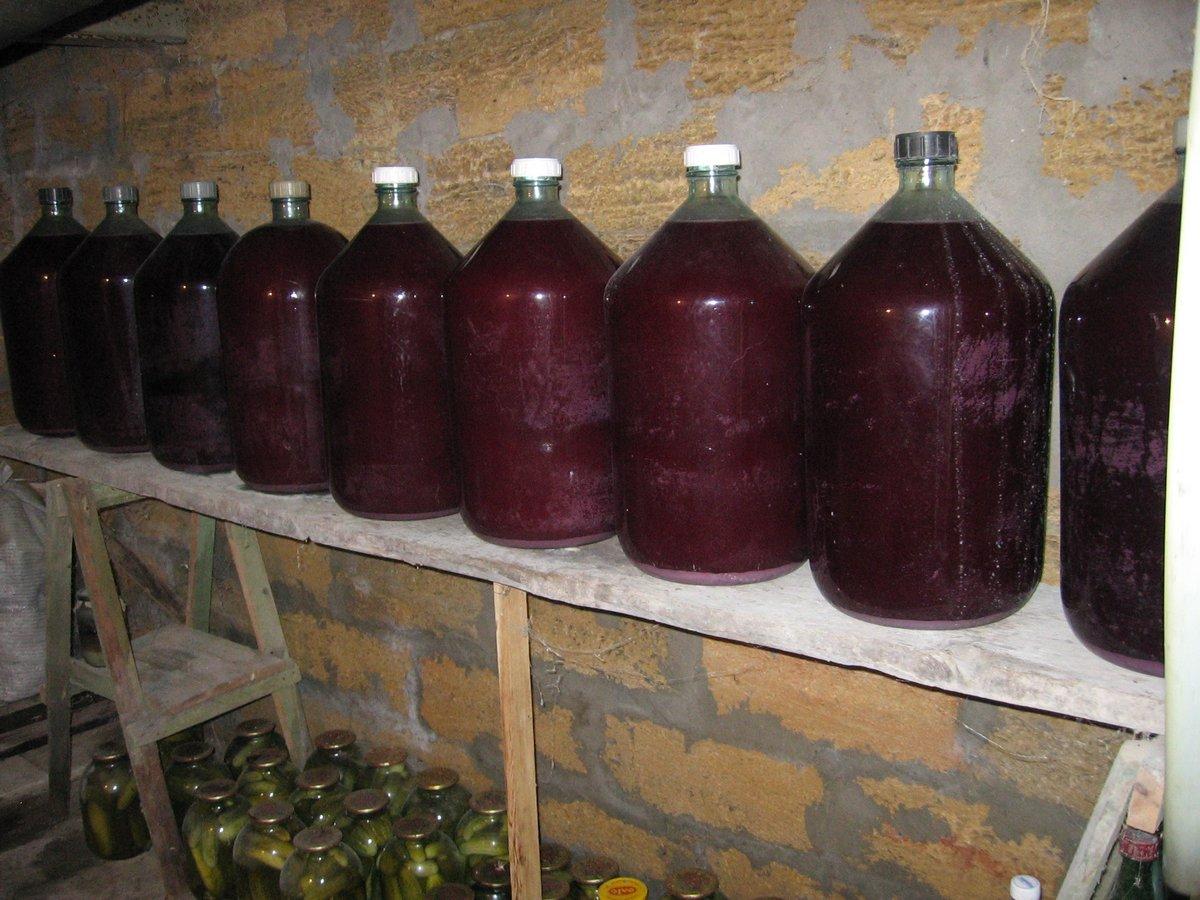 Вино из яблок своими руками в домашних условиях форум