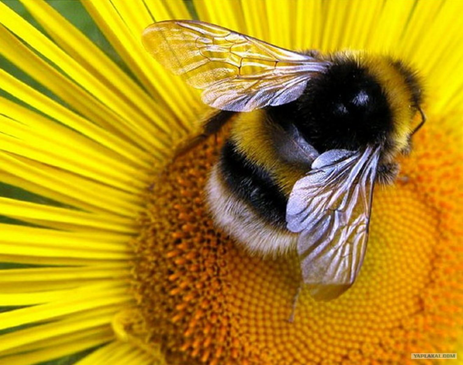 Пчелиный укус в любовном гнездышке 10 фотография