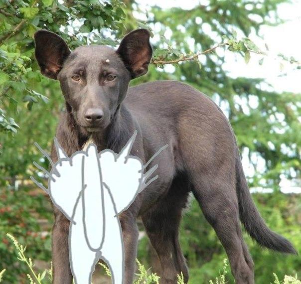 Собака путина фото  animalsfotocom