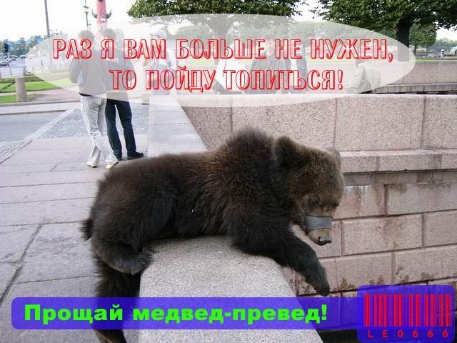 фотография медведя на берегу Невы - фото и фотографии.