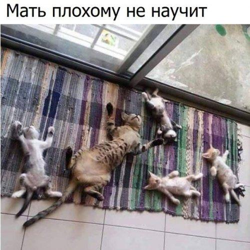 http://s00.yaplakal.com/pics/pics_original/7/8/2/9811287.jpg
