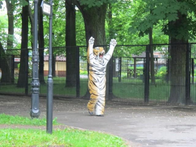 В зоопарке Калининграда прошли учения по ловле сбежавшего из вольера тигра. Роль хищника исполнил сотрудник учреждения
