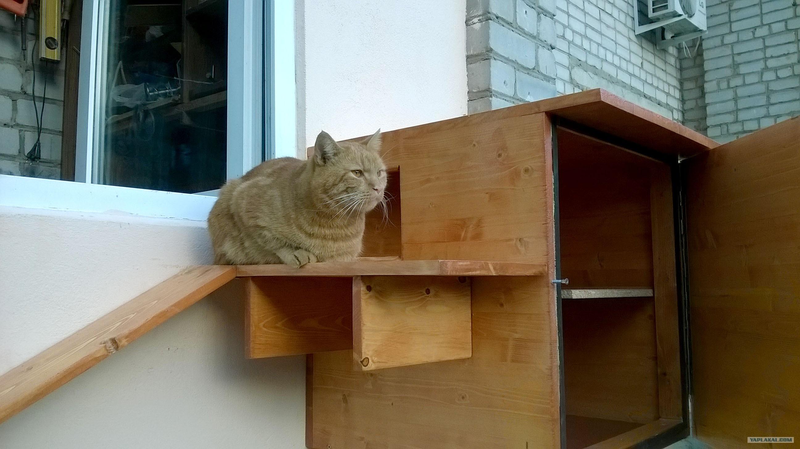 """Запиливание балкона, терем для котов и """"ежи"""".."""