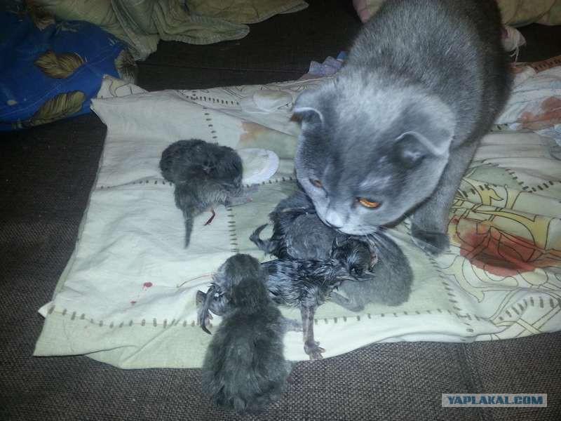 Сон кошка родила котенка