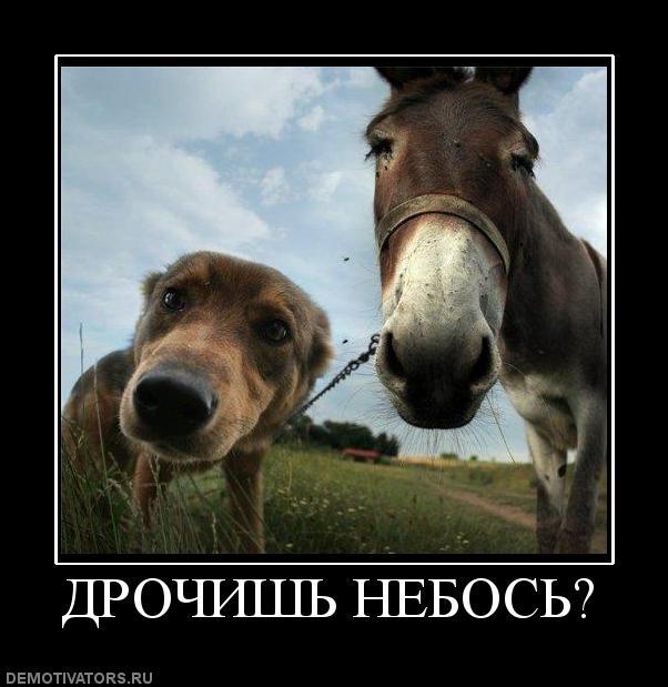 porno-video-s-russkimi-zhenshinami-bryunetkami