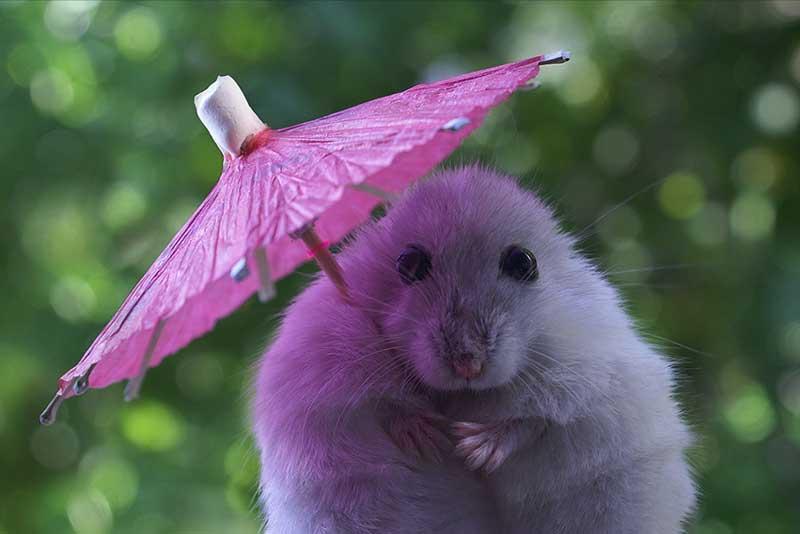 Кажется дождь начинается!