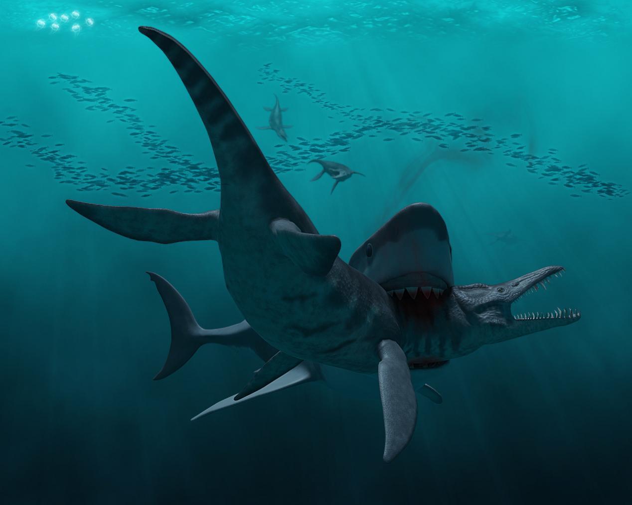 ютуб касатка против белой акулы