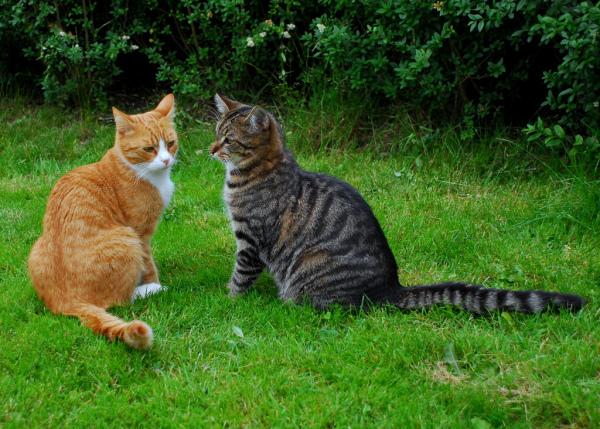 Фоторепортаж с кошачьих разборок!
